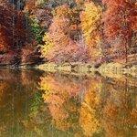 Needwood Lake
