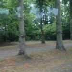 コンピエーニュの森