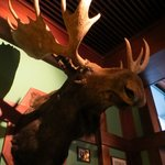mounted Moosehead