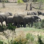 Elephant herd arriving at the Waterhole