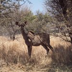 Our welcoming Kudu
