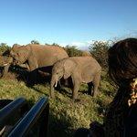 Elephant beside the Landcruiser