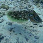 Phi Phi Snorkelling