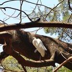 Nada como descansar sobre os galhos de uma árvore
