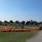 Whittamores Farm