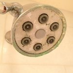 Lime build-up on shower head at Beach Village.