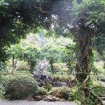More Bantry House Gardens