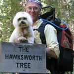 Out on the trail, near the massive Hawksworth Tree