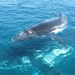 Mother and calf going under the boat