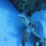 Photo de Aqua Nabq Dive Center