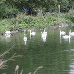 promenade dans le polder