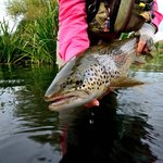 This brown trout has bragging rights!