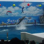 Dolphin show - the dolphin lifts the man up in the air