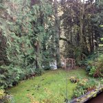 Treehouse Point, Cedar Room, view from patio