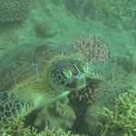 turtle snorkelling