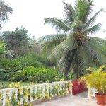 green lush garden surrounding terras