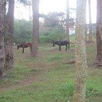خيول بالجوار
