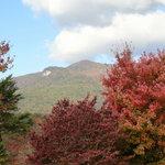 Table Rock area foliage