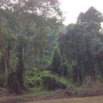 Jungle autour de la rivière