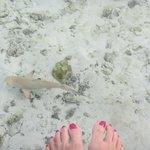 Little shark in the water