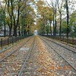Autumn tram lines