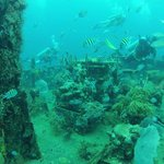 Part of the shipwreck and marine life.