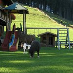 Ponies in the play park