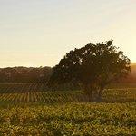 SummerWood Vineyard