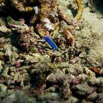 Rainbow Reef w/Paradise Taveuni Pro Dive Team