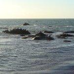 grands cormorans à la pointe de mousterlin
