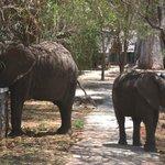 elefanti in visita al lodge