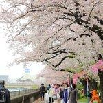 隅田川沿いの遊歩道