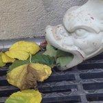 Leaf breathing dragon