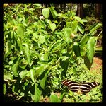 Make sure you visit the butterfly garden outside of the Interpretive Center.