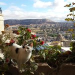 View from restaurant terrace with one of the lovable house cat.