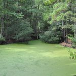 bright green swamp