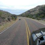 Wildlife on roads