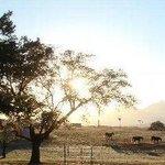 Morning Land Horses