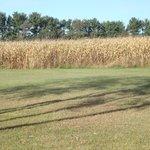 corn fields outside