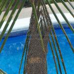 Nido y piscina al fondo