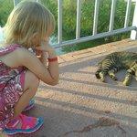 Котов на территории много)