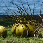 Gleich gibt es frische Kokosmilch !