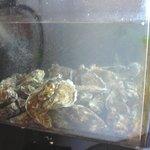Oysters were in Season
