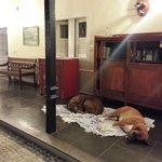 Beide Hunde vom Hotel
