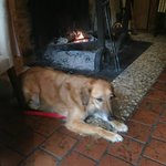 Freddie looking very comfortable by the fire!