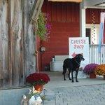 Local goat cheese farm - Lively Run.  SO good!