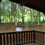 Balcony view to the woods
