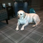 Holly chilling after Woodlands Walk
