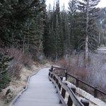lots of boardwalks around lake