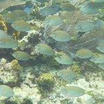 Snorkel Trip to Puerto Moreles